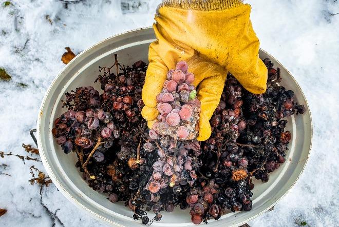 predikatno vino