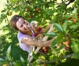 Trebate posao? Britanski farmeri žele da im Hrvati dođu brati voće i povrće