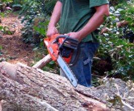 Hrvatske šume otpuštaju drvosječe jer ne mogu podići više od 2 kilograma!