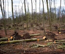 Policija i DORH provode krim istragu u Hrvatskim šumama