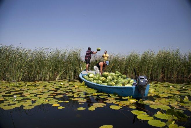 Potpora za pokretanje poslovanja mladim poljoprivrednicima