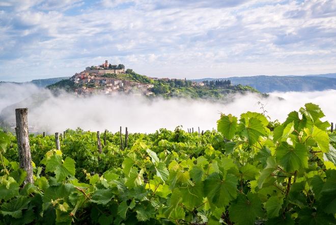 ITER VITIS konferencija: kako će izgledati vinski turizam nakon pandemije?