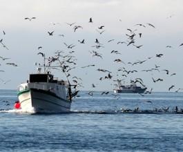Sve manje ribara, a više plovila