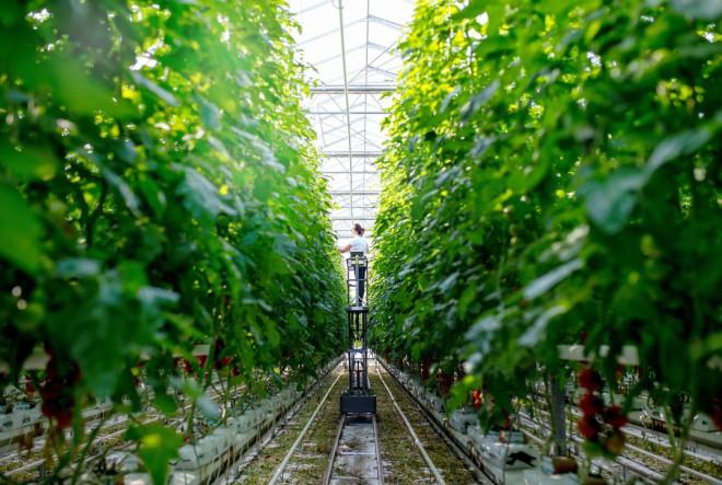 Rebranding najznačajnijeg domaćeg proizvođača rajčice