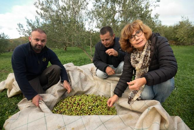 Maslinovo ulje dalmatinskih OPG-ovaca uz Zvijezdu do potrošača u cijeloj Hrvatskoj