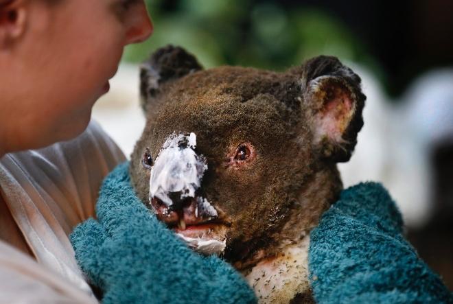 Revolut u suradnji s Crvenim križem i WWF-om poziva na pomoć australskim područjima kojima haraju požari