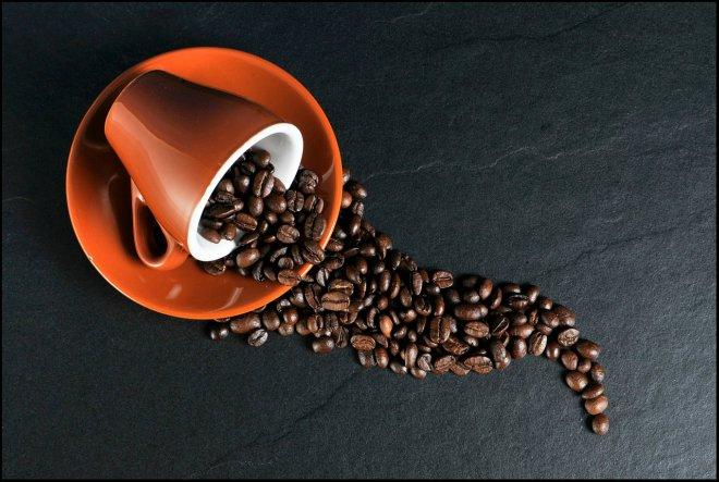 Stotinu obnovljenih plantaža kave