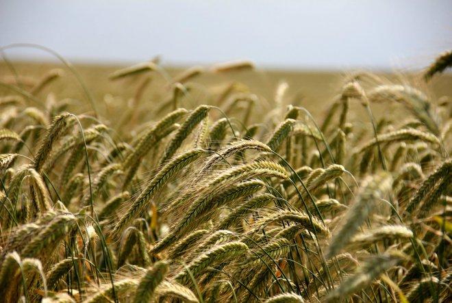 Otvoren natječaj za najboljeg mladog poljoprivrednika ili poljoprivrednicu