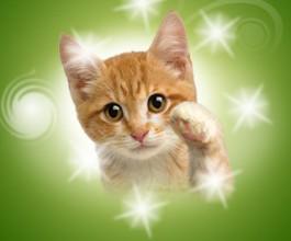 Aplikacija koja rješava problem tvrdoglavih mačaka!