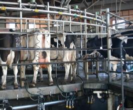 Ne uskladi li propise BiH više neće moći izvoziti hranu u EU