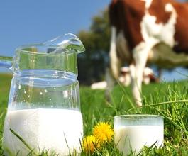 Prijeti nestašica mlijeka! [VIDEO]