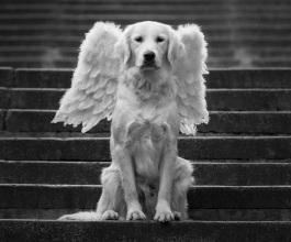 "Upoznajte ""prave"" anđele [FOTO]"
