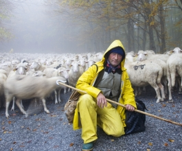 Istraživanja pokazuju – visokoobrazovani Hrvati radili bi kao pastiri!