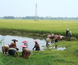 Rast svjetske proizvodnje riže za 4 posto – azijske zemlje najveći uvoznici