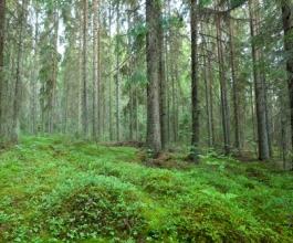 Bi li Tihomir Jakovina prodavao svoju imovinu po modelu Hrvatskih šuma?