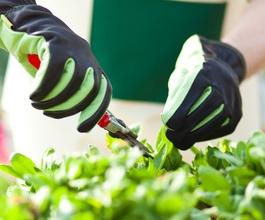 Uzgojem ljekovitog bilja protiv dugotrajne nezaposlenosti